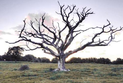 Девушка, дерево и динамит...