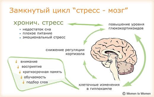 Хронический стресс создает замкнутый цикл побочных эффектов на наш мозг
