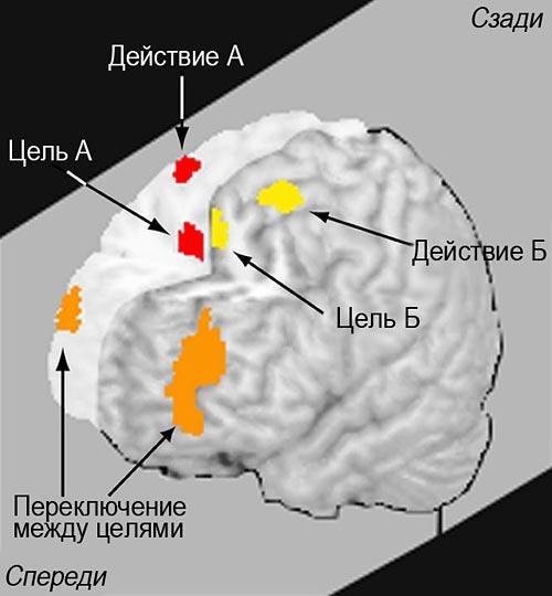 Мозг переключается с одной задачи на другую, тратя ценные ресурсы