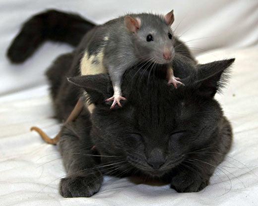 А вот кошки щекотки не боятся!!!