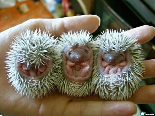 Новорожденные кжики