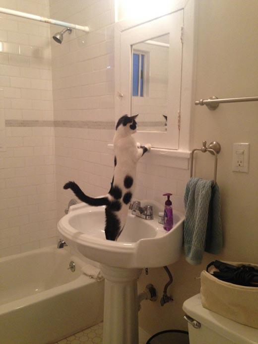 У кота случился экзистенциальный кризис. Прямо в раковине