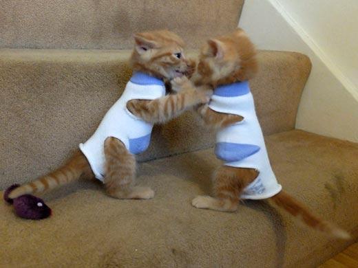 Эти котята устроили битву в носках