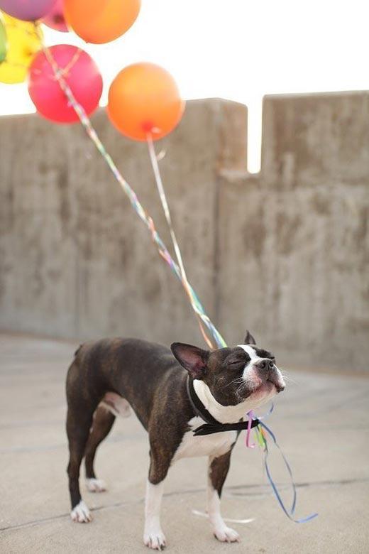 Самый довольный в мире пес
