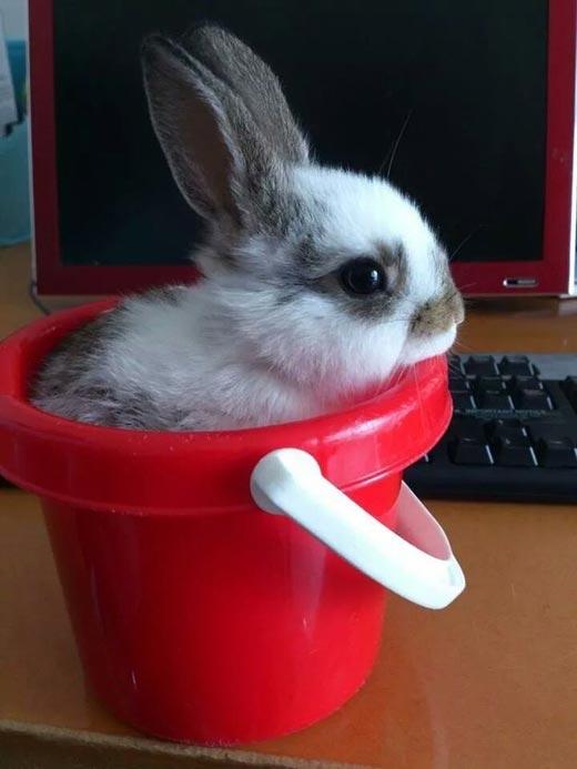 У бедного кролика даже нет личного офисного кресла