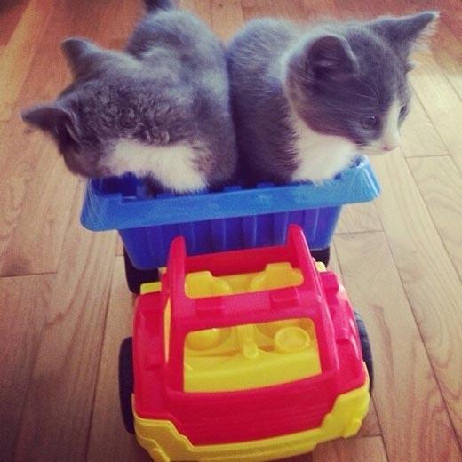 Котята-строители отправляются на работу