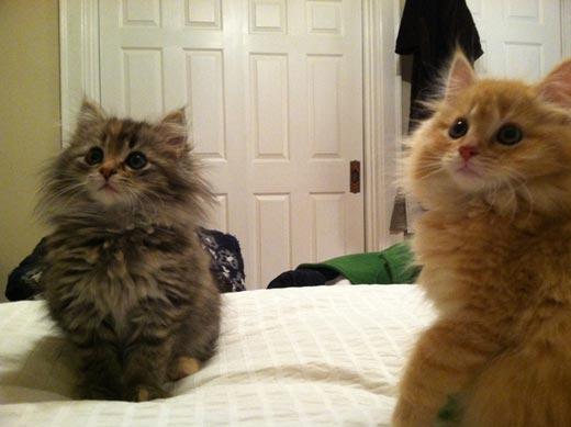 Эти котята не могут отвести взгляд!