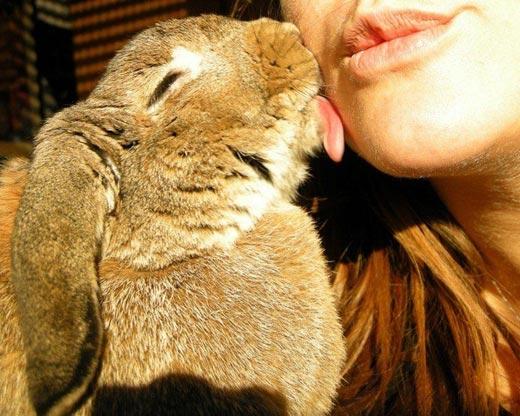 Кролики... Это не только ценный мех