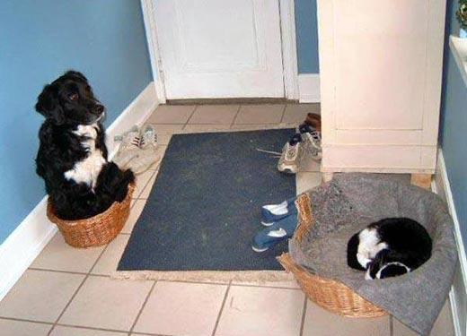 Отнимает у вашего пса его законное место