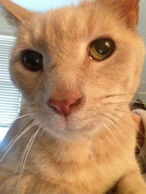 После 3 лет разлуки кот нашел своего потерянного брата-близнеца!