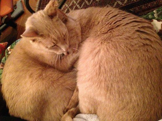 Два кота сразу же узнали друг друга!