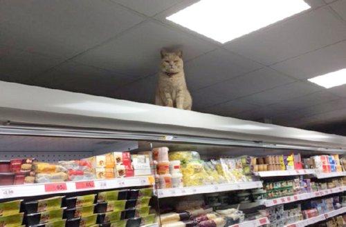 Кот и его суперкмаркет