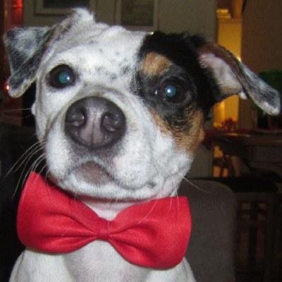 Даймонд - маленькая собака с большим сердцем