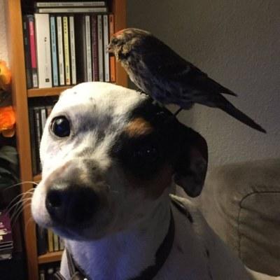 Эта птица совсем не боялась собаки, которая спасла ее.