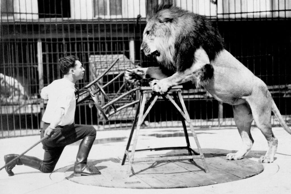 Клайд Битти - укротитель львов